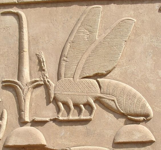Carving of Amenhotep I from Karnak, showing the detail of the bee-sign. Sacred Signs