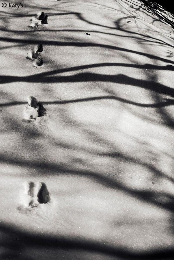Shadows by Clodiana Prendi on 500px