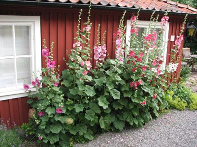 Swedish house with beautiful flowers
