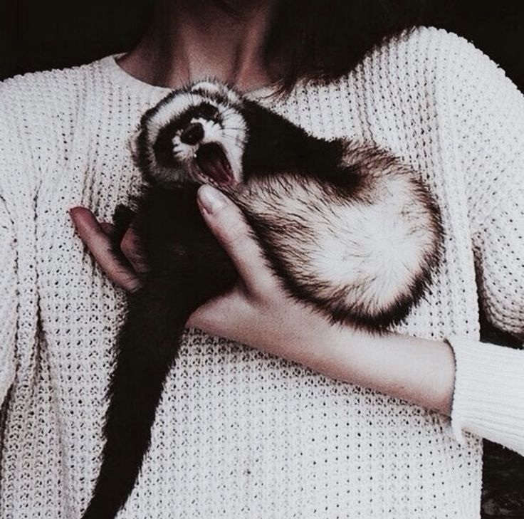 Look, was ANYONE operating under the impression that he was a morning ferret? Also, one day he's going to be a lot bigger, and then no one can pick him up with one hand and compromise his dignity.