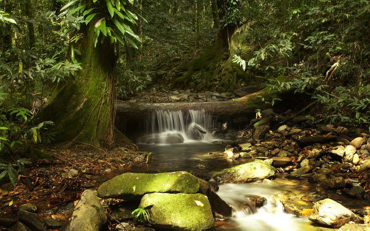 King Fern Creek - Daintree rainforest