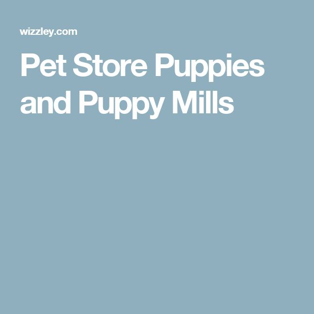 Pet Store Puppies and Puppy Mills