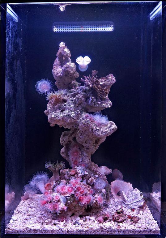Jim s temperate pico aquarium is a spectacular example of for Aquarium recifal nano