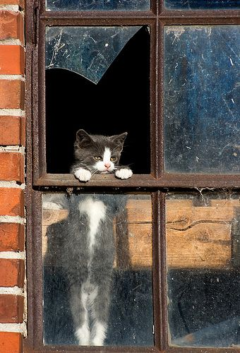 Kitty peaking out of Broken Window of Abandoned Building http://www.flickr.com/photos/24366797@N04/4835772308/sizes/l/in/photostream/