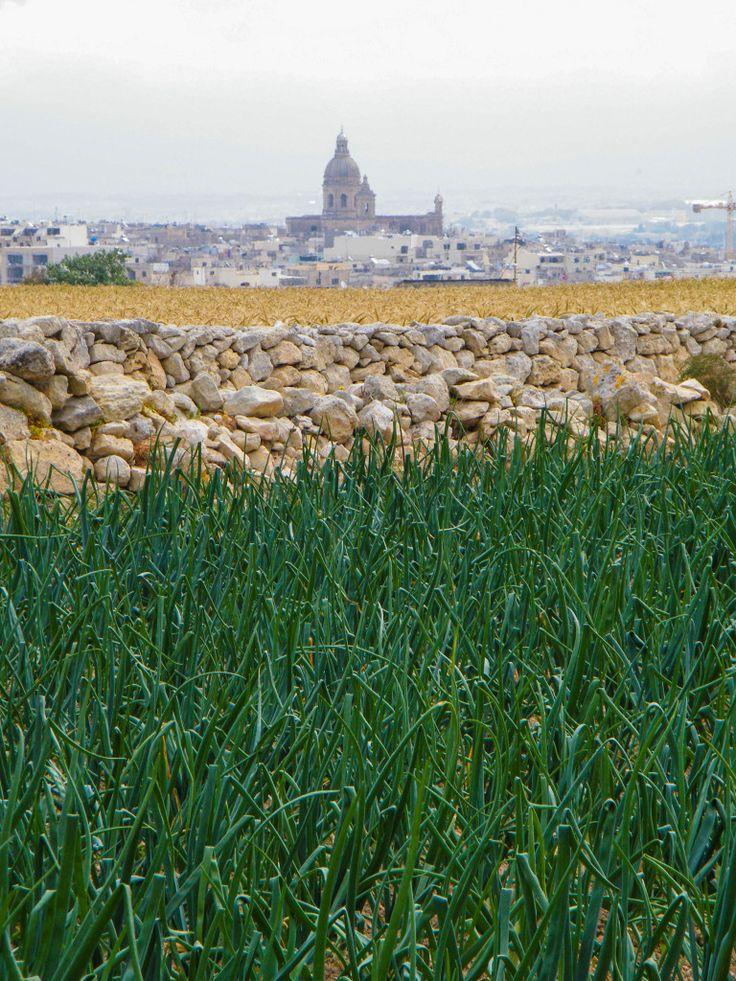 Visiter la Sicile et Malte à vélo. Courant avril, Voyageons Autrement a reçu le genre d'invitation qui ne se refuse pas : participer à l'inauguration officielle du projet Sibit, Med in bike. Un réseau de cyclotourisme qui traverse le sud de la Sicile ainsi que les îles de Malte et de Gozo.
