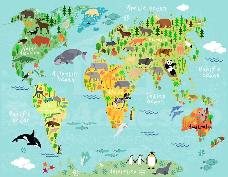 Fotomurales: Mapamundi infantil 2