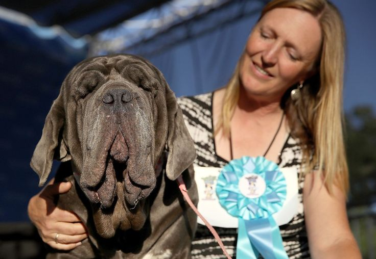 Drop Dead Grotesque! 'Gassy' Mastiff Martha Reigns Supreme at 2017 World's Ugliest DogContest