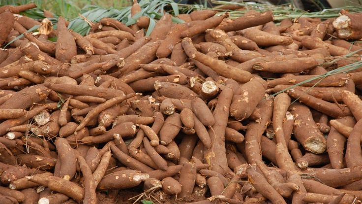 Nigeria records N2.7trillion postharvest losses yearly
