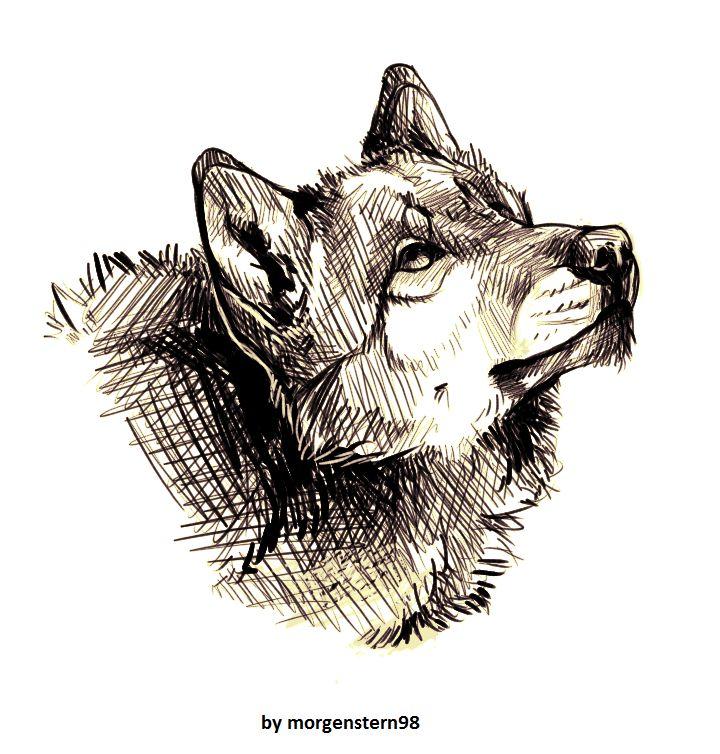 Wolfes. Sketch 4. by Morgenstern98.deviantart.com on @DeviantArt