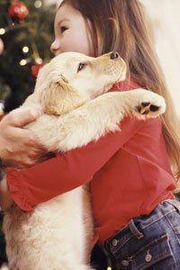 Haustiere kaufen - Viele Eltern werden es kennen: Das Kind wünscht sich nichts sehnlicher als ein eigenes Tier und setzt Himmel und Hölle in Bewegung, damit Mama und Papa ihm endlich ein Haustier kaufen...