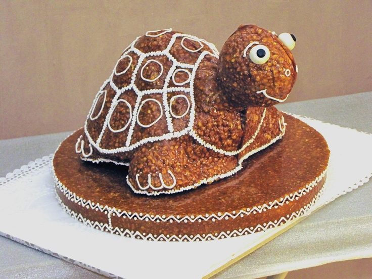 Teknős / Turtle