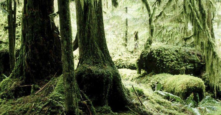 Como fazer um ecossistema de floresta tropical em uma caixa de sapatos . Fazer um ecossistema de floresta tropical utilizando uma caixa de sapatos é uma maneira criativa de exibir a natureza rica desse ambiente. Apesar do fato de que as florestas tropicais estendem-se sobre apenas 2% da superfície terrestre, elas contêm mais de 2/3 de todas as espécies de seres vivos. Procure em livros sobre florestas tropicais ...