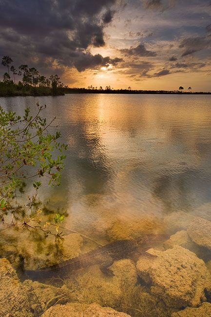 Pineglades Lake, Everglades National Park, Florida (FL), USA