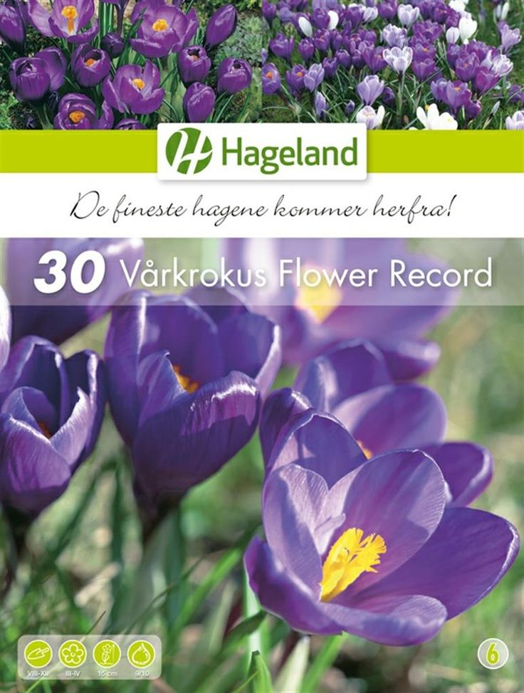 Bilde av Crocus Flower Record