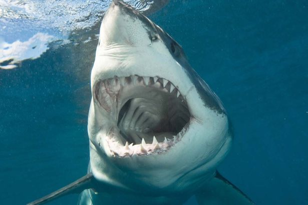 Real life Great White shark horror of diver who filmed most ...