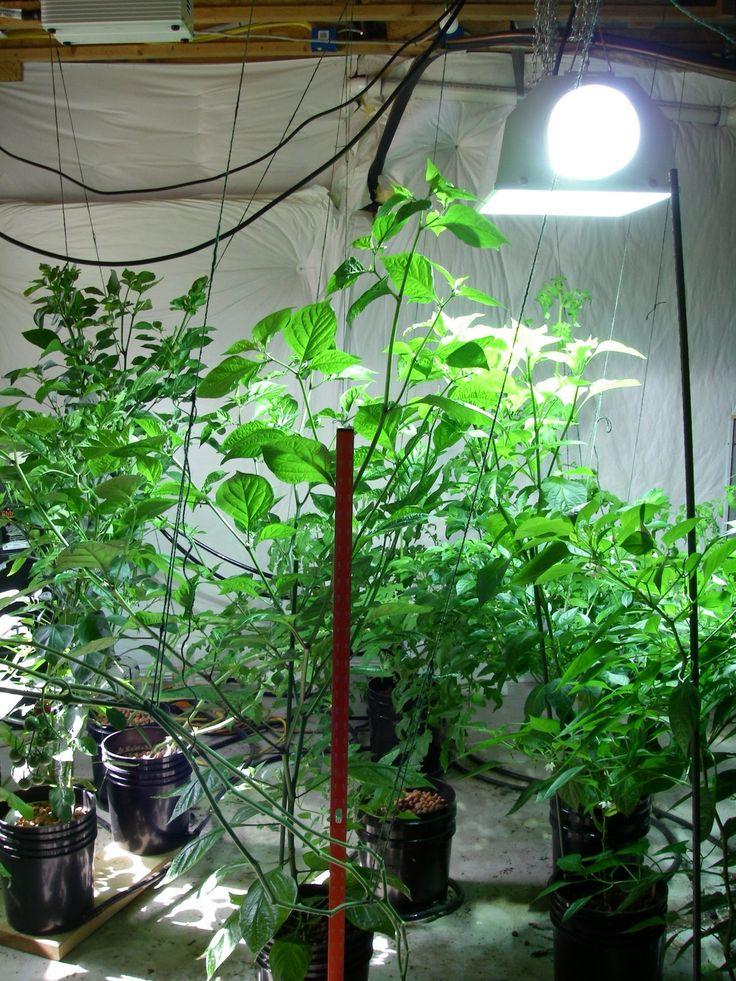 Indoor vegetable garden click indoor plants and for Indoor vegetable garden