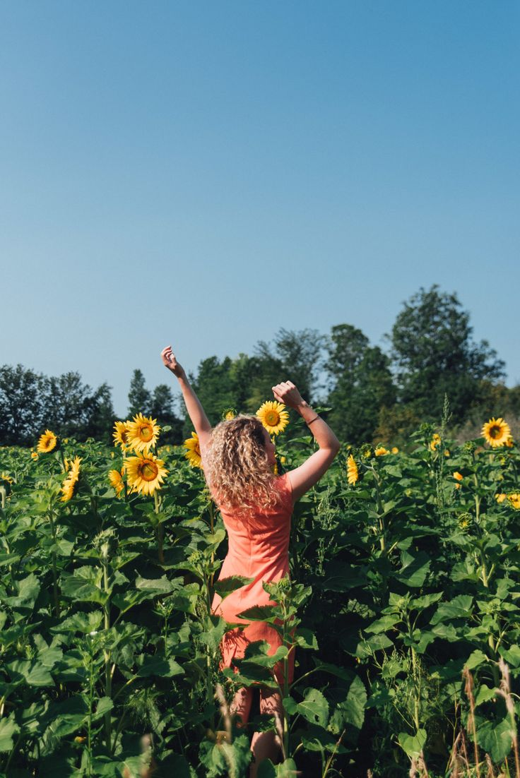 Kricklewood Sunflower Farm - Kingston, Ontario