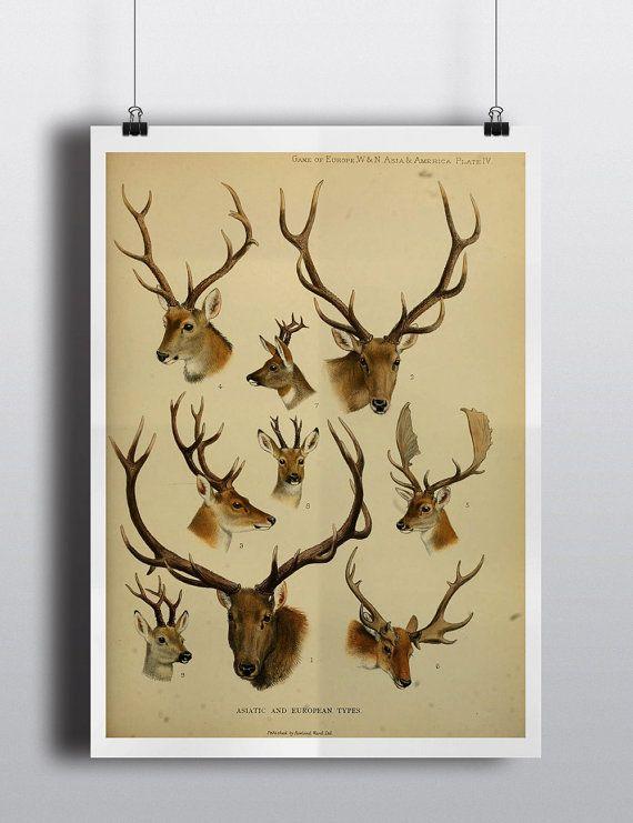 37 best Antlers images on Pinterest | Deer antlers, Antlers and Deer ...