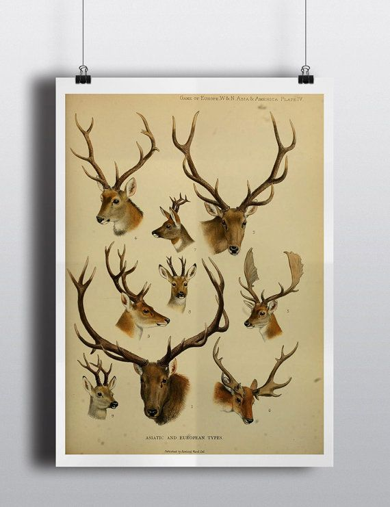Nice Stag Head Wall Art Motif - All About Wallart - adelgazare.info
