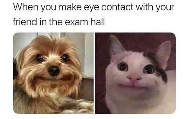 Peppyfeed Memes Memesdaily Dailymemes Funnymemes Bestmemes Ricardomemes Elonmuskmemes Foodmemes R Animal Memes Clean Animal Memes Funny Animal Quotes