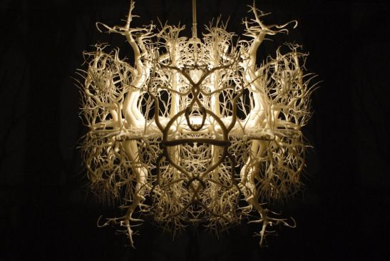 The Light sculpture Forms in Nature resembles Darwinist Ernst Haeckel's drawings . By HildenDiaz.