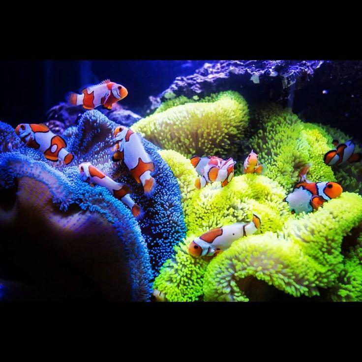 979 besten poissons bilder auf pinterest meeresfische for Salzwasser aquarium fische
