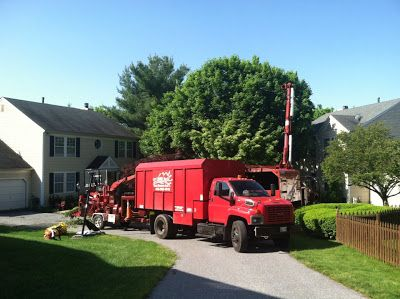 Tree Service Annapolis: Tree Care and Tree Removal Service Annapolis - Unl...