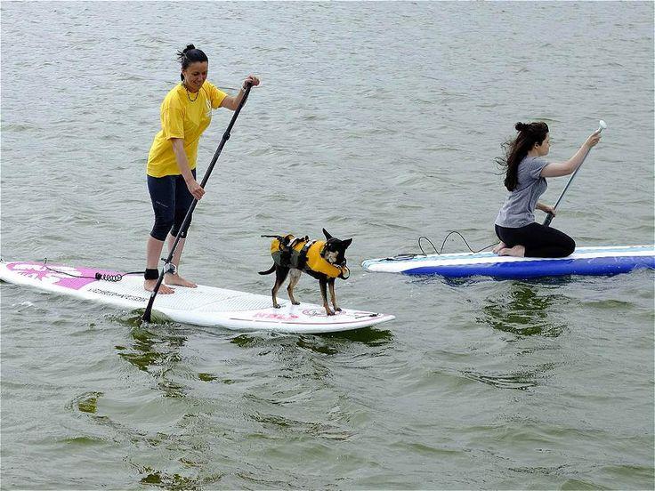 Phil Noble / REUTERS En New Brighton, Inglaterra, un perro usa un chaleco salvavidas mientras que lo llevan sobre una tabla. de la semana sept