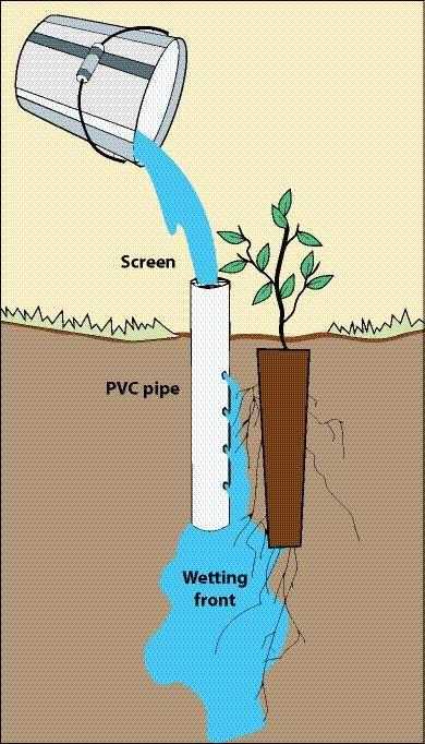Wicking Irrigation for Tree Establishment (greening the desert forum at permies)
