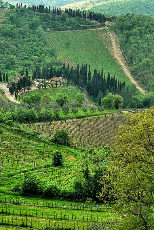 Chianti vineyard in Siena, Italy. (photo by Antonio D'Amico)
