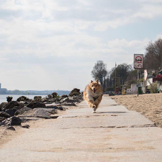 Bild Konnte Enthalten Hund Himmel Und Im Freien Regram Via Www Instagram Com P Bwzwsnkh0el Bilder Instagram Hunde