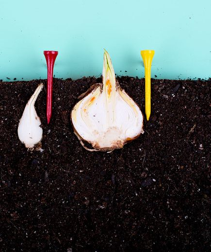 Golf Tee as a Garden Marker | Plunk a tee next to every perennial bulb you plant and you'll know where the bulbs are even when the leaves are not visible.