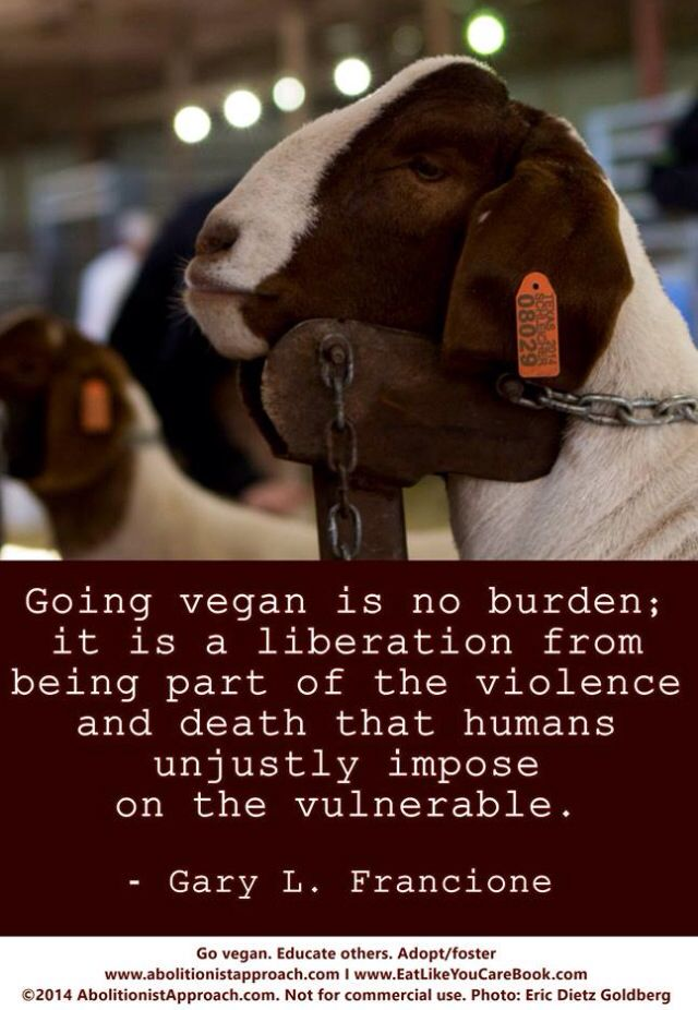 speciesism human beings Challenging speciesism and taking into account the interests of all sentient beings thus entails the abolition of various practices, the bloodiest of which, given the number of victims, remains the consumption of animal products.