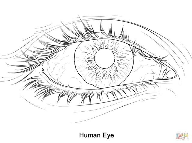 25 Inspired Photo Of Eye Coloring Page Realistic Eye Drawing