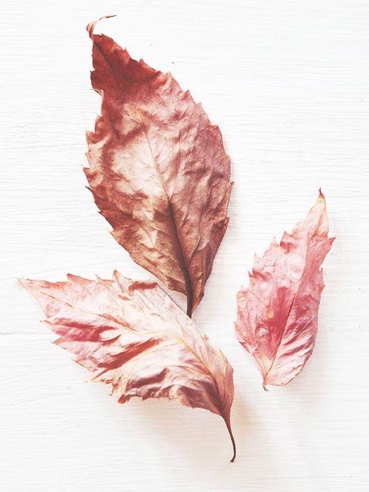 ~Pink Autumn Day~