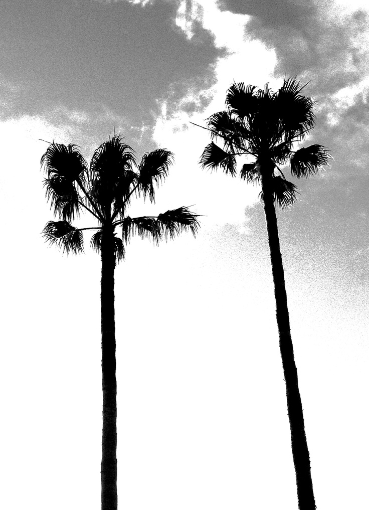Printed black and white palm tree photo by Alicia Connolly