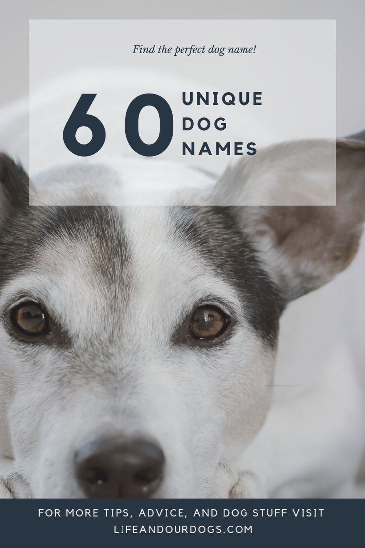 60 Unique Dog Names To Help You Pick The Perfect One For Your Dog