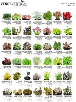 Paleta Vegetal   Jardines Verticales