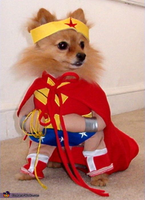Pat: This is a 7 yr. old Pomeranian named Phoebe and is very cutely outfitted as Wonder Woman. Thank you Pat, for your entry. Your beastie is cute as can be....