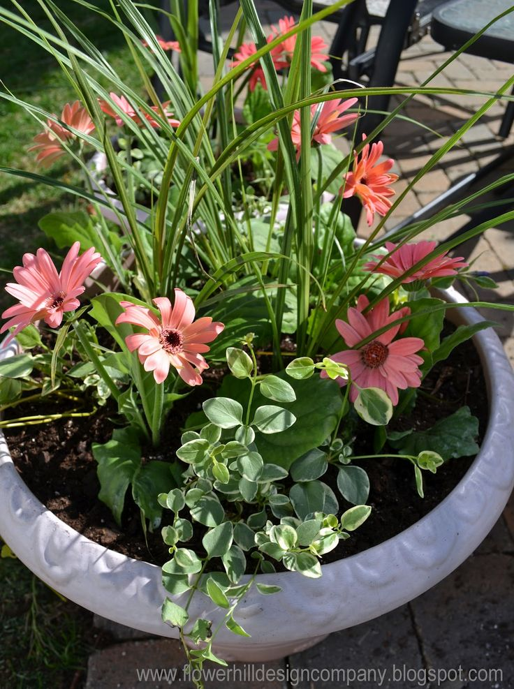 Simple Flower Garden Ideas Pictures 28 best annual flower containers images on pinterest | flowers