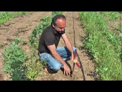 καλλιέργεια ντοματας - YouTube