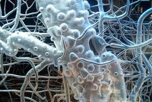 The Vagus Nerve and the Healing Promise of The Sudarshan Kriya ~ At the center of our bodies resides a long, sinewy nerve that extends all the way from our medullas down through our chests to beyond our stomachs. ~ http://www.wakingtimes.com/2013/05/20/the-vegus-nerve-and-the-healing-promise-of-the-sudarshan-kriya/