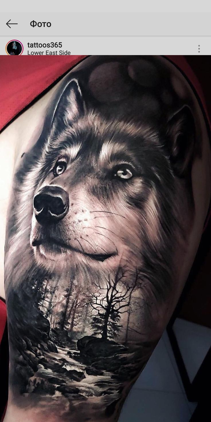 Pin di Lotta Hedlund su Tattoos :)   Tatuaggio lupo ...
