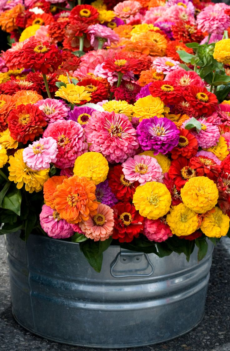 """""""We praise the zinnia for being a trooper in the garden and for being relatively easy to grow. Their bursts of color and assortment fill us and our clients with glee,"""" Noelle says."""