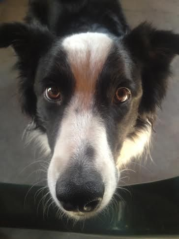 """WHY SO SERIOUS? POOR DOG, BEGGING TO BE WALKED! dogsbigdayout.com.au """"LET ME HELP YOU, HELP YOUR DOG!"""""""
