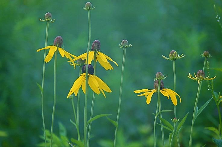 Image Result For Bellevue State Parkerfly Garden