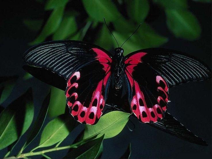 : Beautiful Butterflies, Animals, Nature
