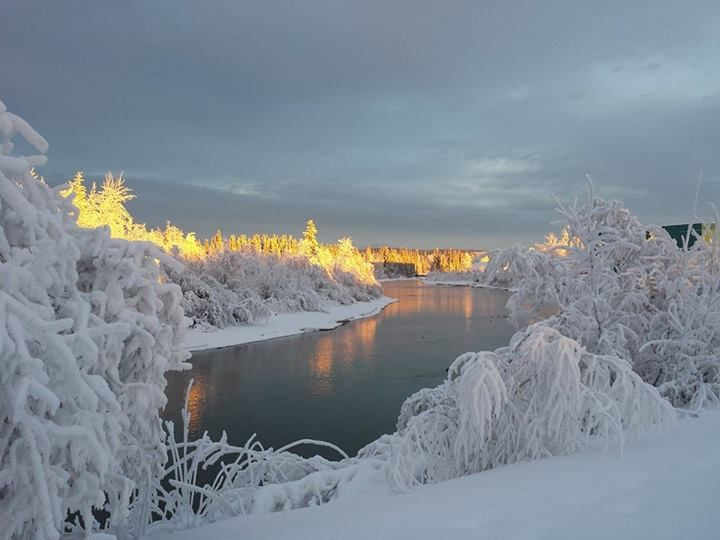 17 Best Images About Alaska Fairbanks On Pinterest Ohio Flag Dairy And The Immaculate