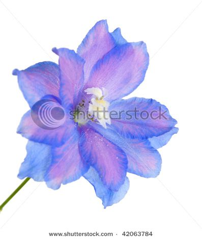 july birth month flower