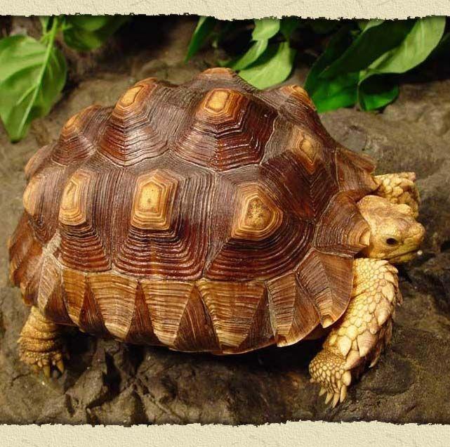 RainForest Turtles Tortoises